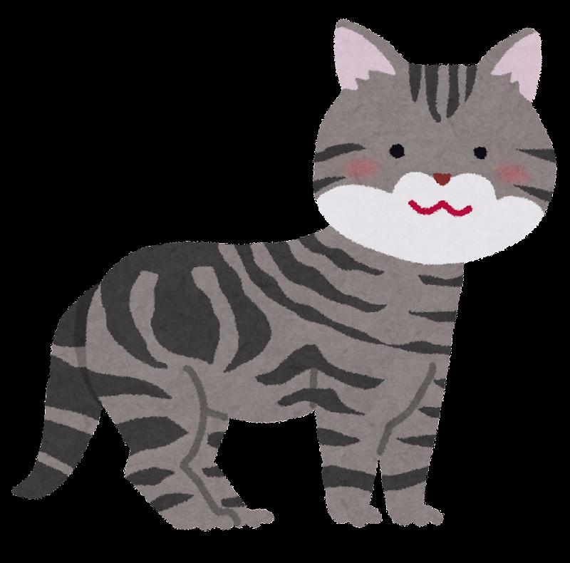 アメリカンショートヘアのイラストのイラスト猫 かわいいフリー