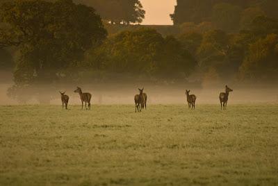 Deer, Hunt, hunting, fog