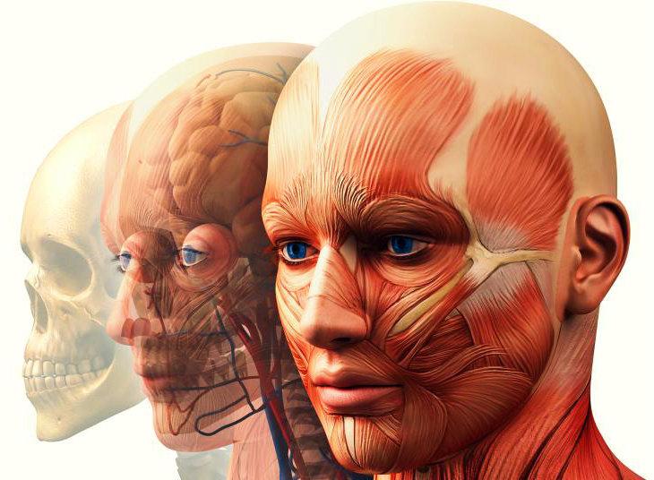 Definición de Anatomía Humana, Qué es, su Significado y Concepto