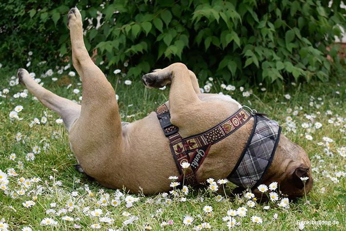 Ein selbstgemachtes Kühlhalstuch für Hunde