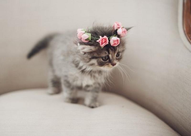 chat couronne de fleur inspiration du dimanche