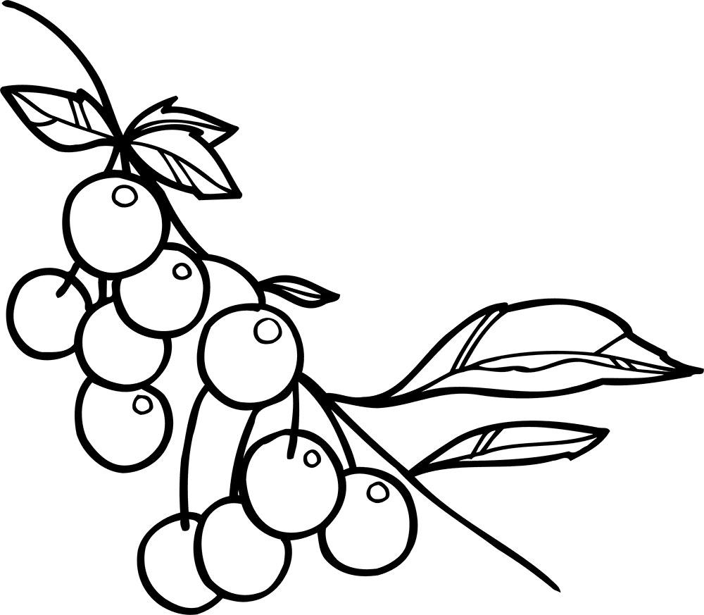 Gambar mewarnai buah cherry