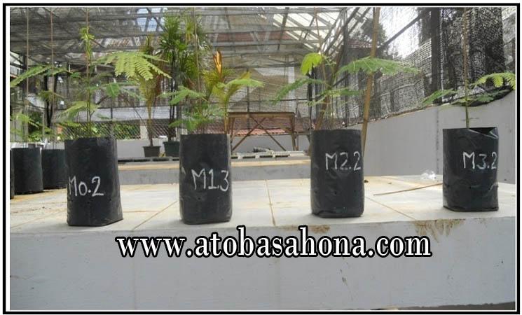 Contoh Proposal Penelitian Pertumbuhan Bibit Sengon (paraserianthes falcataria. L) Pada Berbagai Media Tumbuh