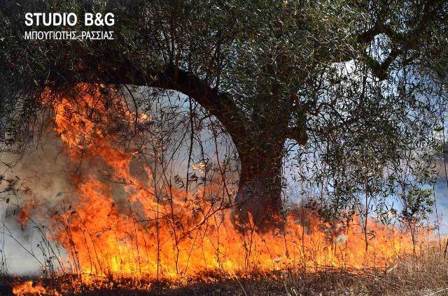 Σε υψηλό κίνδυνο εκδήλωσης πυρκαγιάς σήμερα και η Αργολίδα
