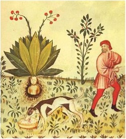 El verso octosílabo, de la métrica celeste, Francisco Acuyo