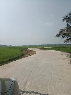 Concrete road through paddy fields, Satyabadi, Puri