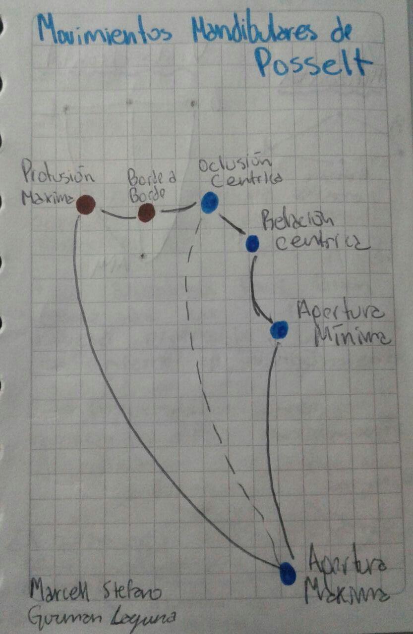 small resolution of posselt s diagram wiring diagram used posselt s diagram