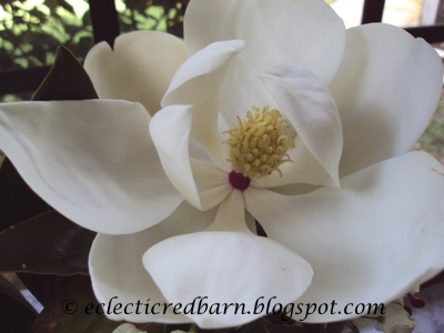 Eclectic Red Barn: Magnolia Full Blooming Flower