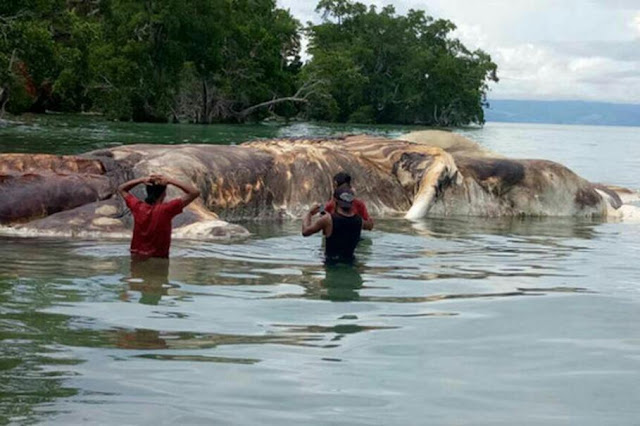 An Enormous Sea 'Monster' Was Found On The Shores of Indonesia! What Could it Be?