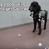 Με τηλεχειριστήριο και γιλέκο! Ένας νέος τρόπος για να καθοδηγείς σκύλο....