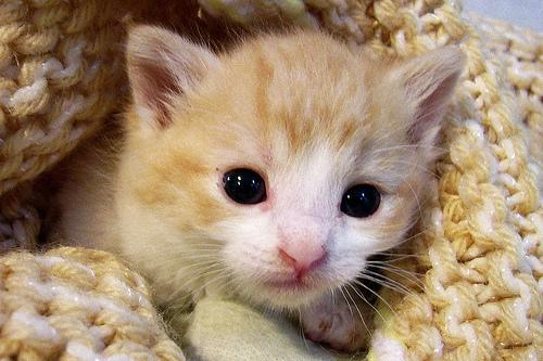 cute kitten cat cats kittens cutest