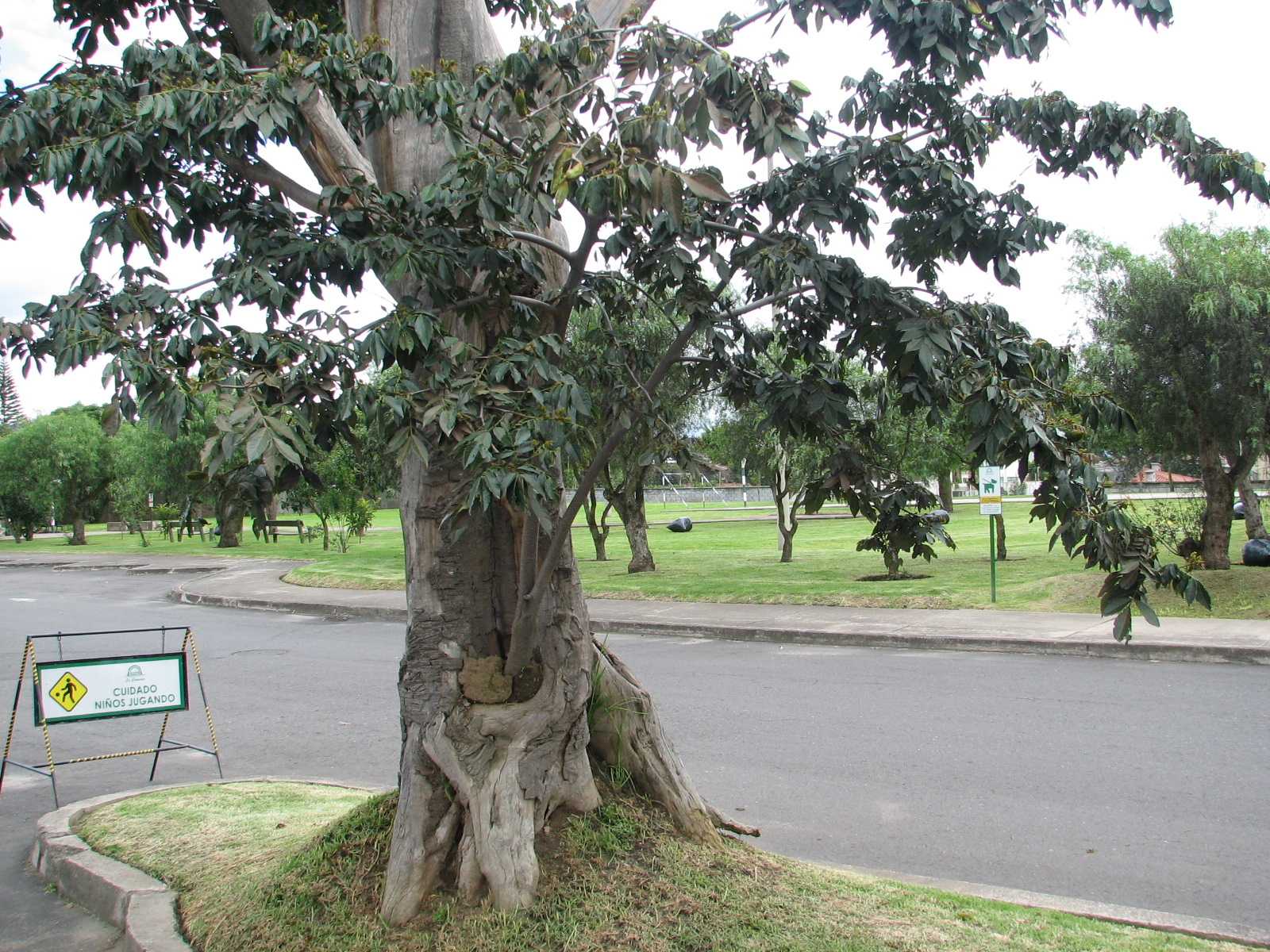 La Comarca se comunica: Las plantas en el parque: la Guaba