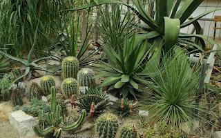 http://fotobabij.blogspot.com/2015/03/succulent-and-cactus-garden.html