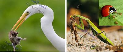مسببات المرض والموت عند النبات - المواد السامة - المبيدات السامة - المكافحة البيولوجية -المناعة