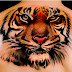 Things Know About Tiger Tattoos!