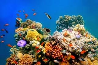 australia-lugares-turisticos-coral