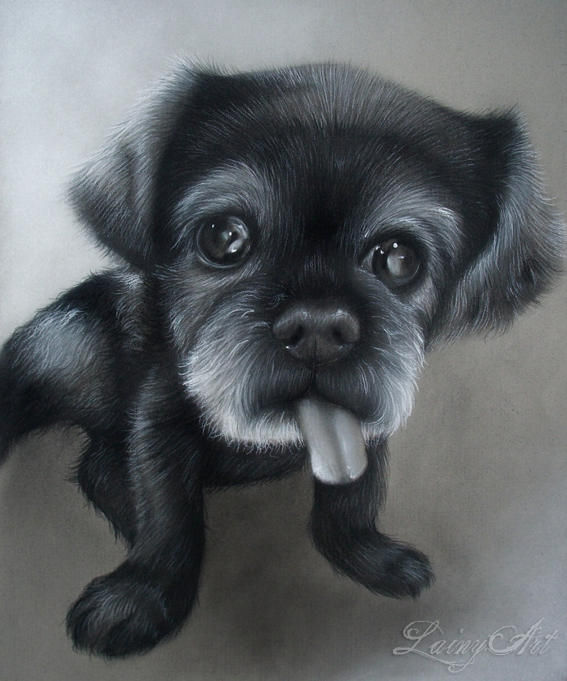 12-Smokey-Alaina-Ferguson-Lainy-Animal-Charcoal-Portrait-Drawings-www-designstack-co