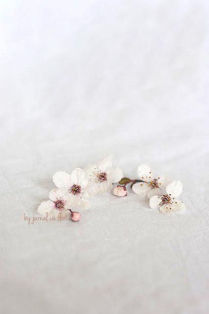 flori albe de primavara