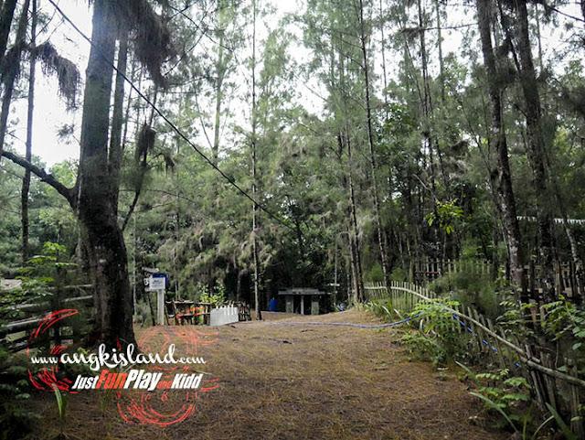 Hutan Cemara Sembung
