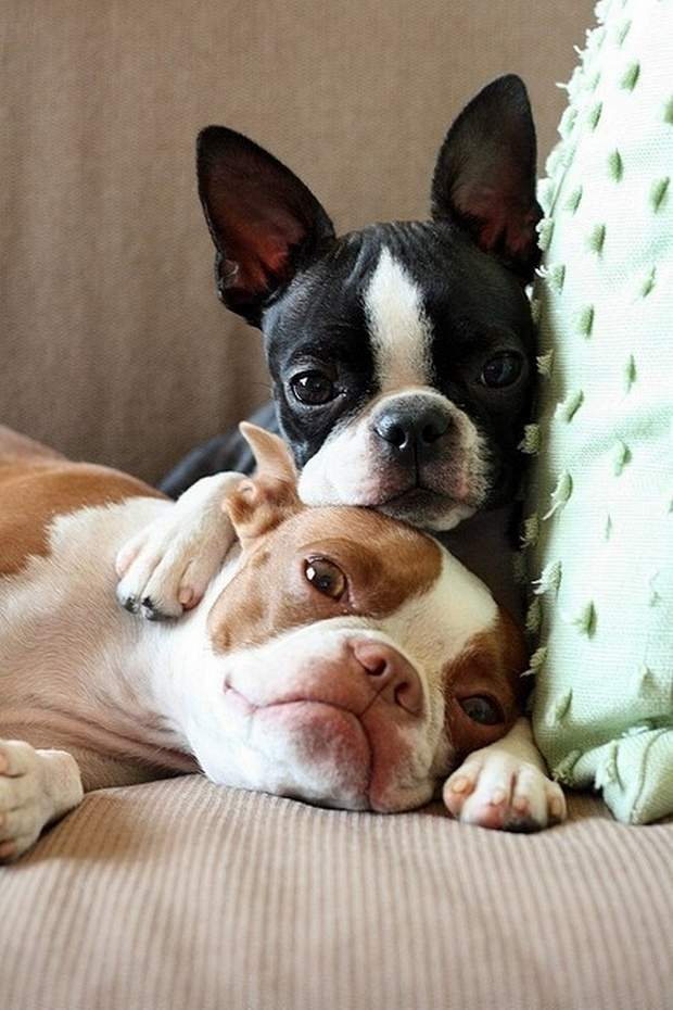 Cute dogs - part 133, cute dog photos, funny dog album, best dog pictures gallery