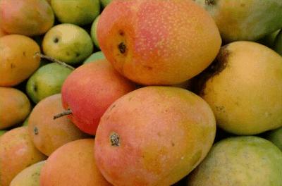 Mangga Gedong Gincu