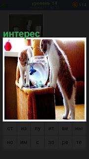 две кошки крутятся вокруг аквариума, где плавают рыбки