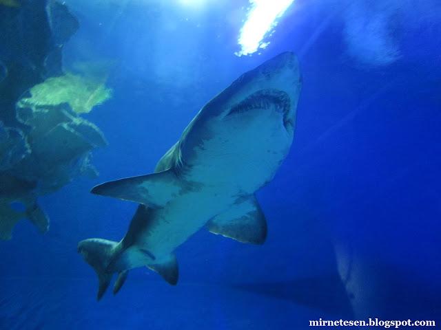 Аквариум Куала-Лумпура, акулы
