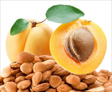 Bitter apricot Seed,Bitter apricot Seed Exporter,Bitter apricot Seed in delhi