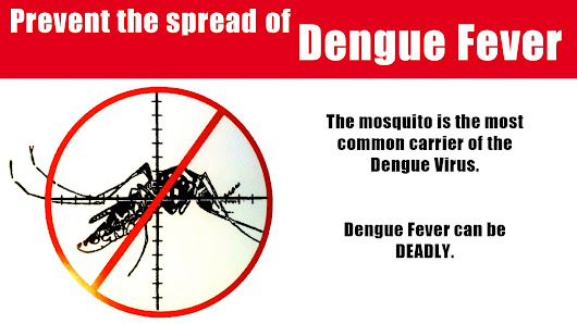 How to Prevent and Treat Dengue with Natural Remedies.