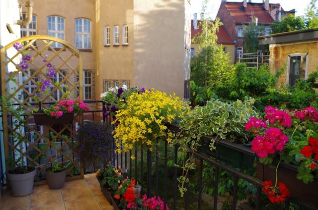 rośliny na balkonie w kamienicy