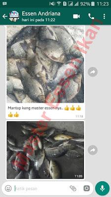 Essen Untuk Umpan Ikan Nila Kilo Gebrus