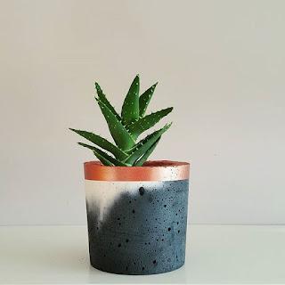 Aloes w sypialni