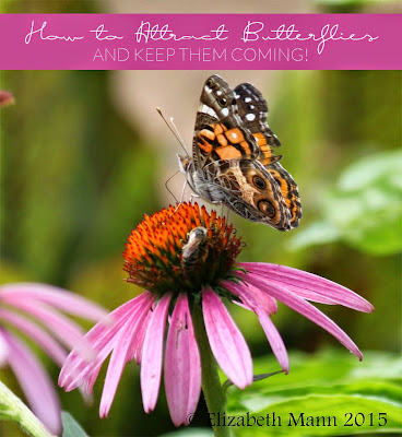 How to Attract Butterflies, shared by Hello Nature at www.The-Chicken-Chick.com