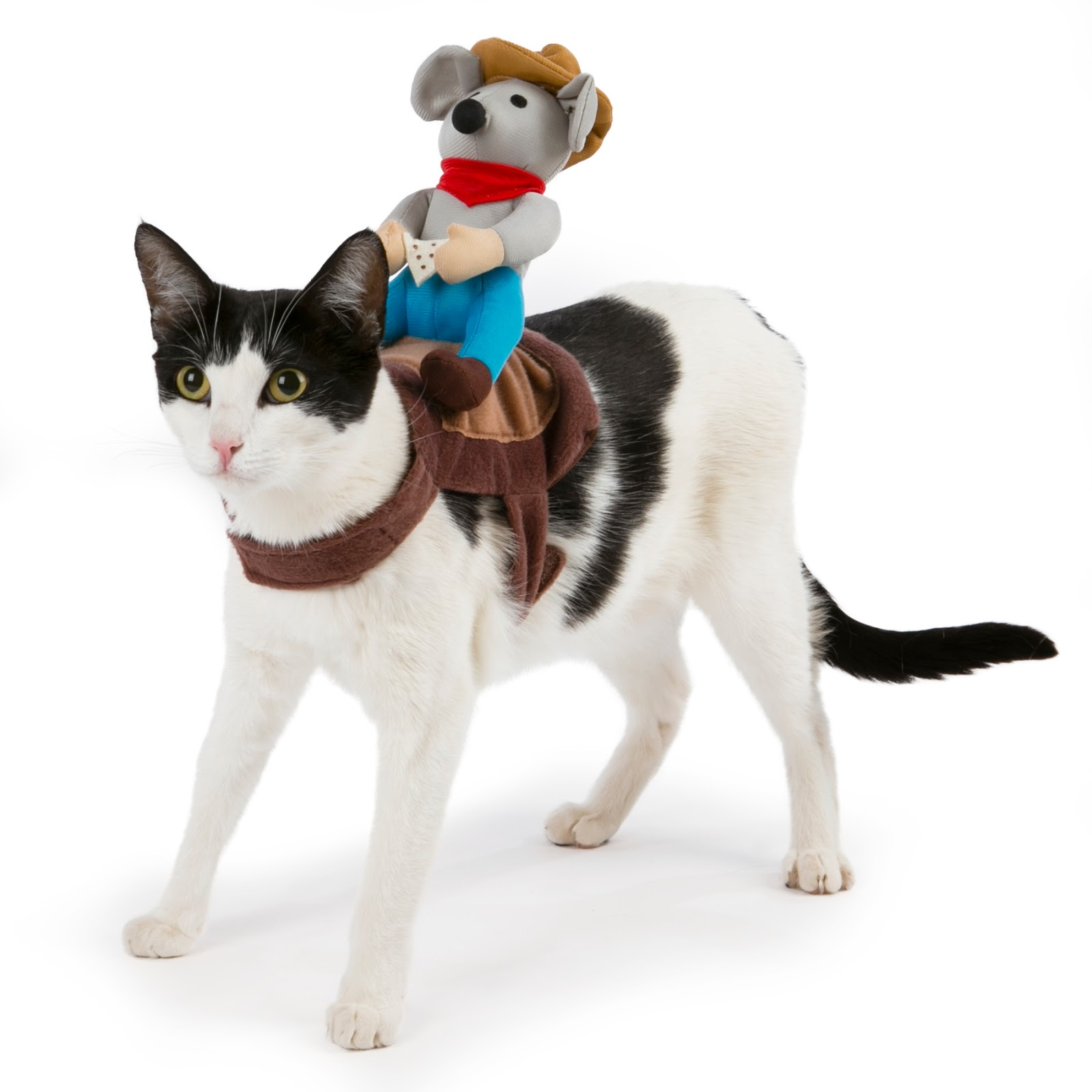 Halloween Costumes for Your Pet from PetSmart, #MonsterCute