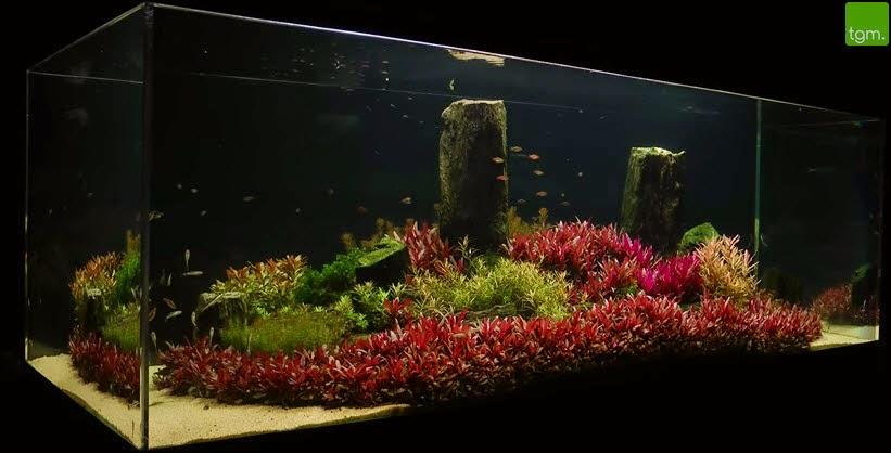 vinhaqua.com - Hồ thủy sinh trọn bộ - Rừng hoa