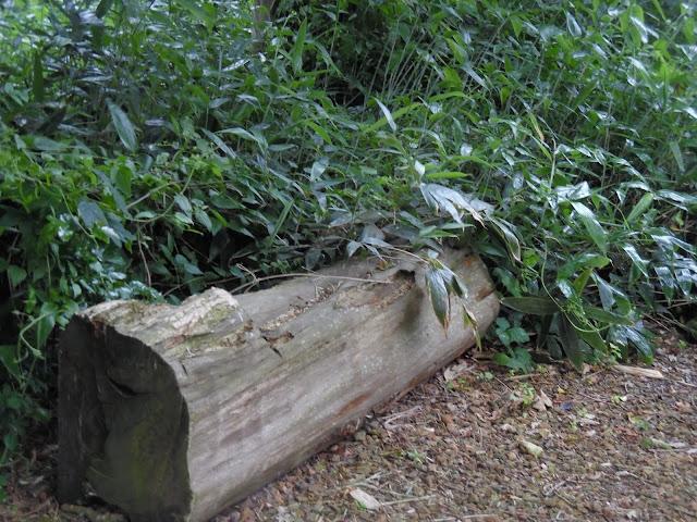 ławka z bala drewnianego