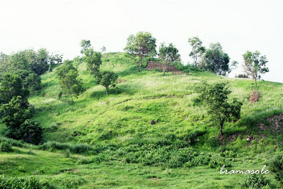 Bukit Hijau, Ilalang & Bunga Liar