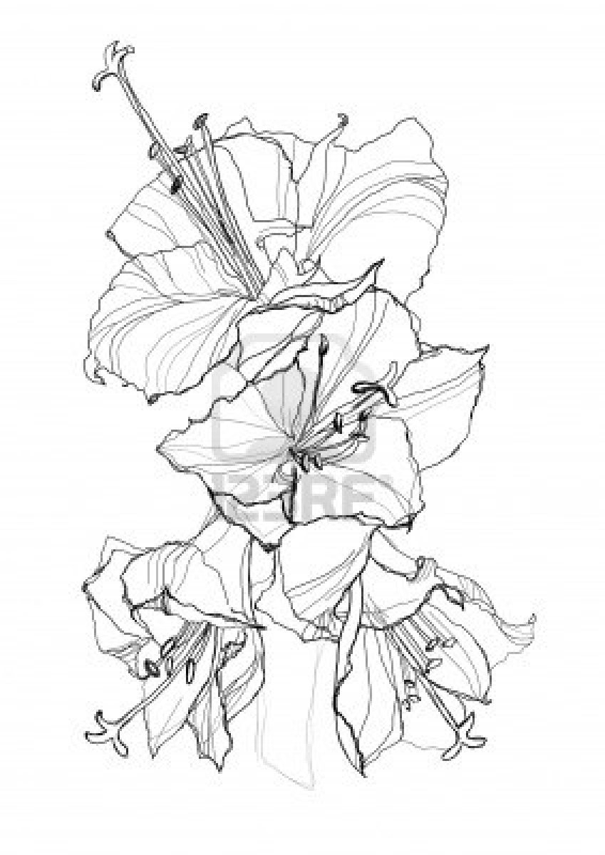 Orchid Flower Drawing Simple