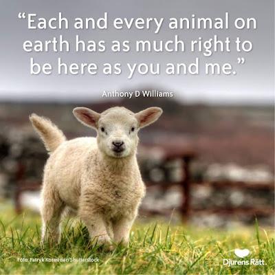 Djurens Rätt - Rörelse för djurrätt