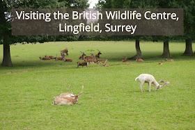 British wildlife centre header