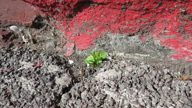 New blades of grass and a tiny plant emerging from a crack by a red painted wall.