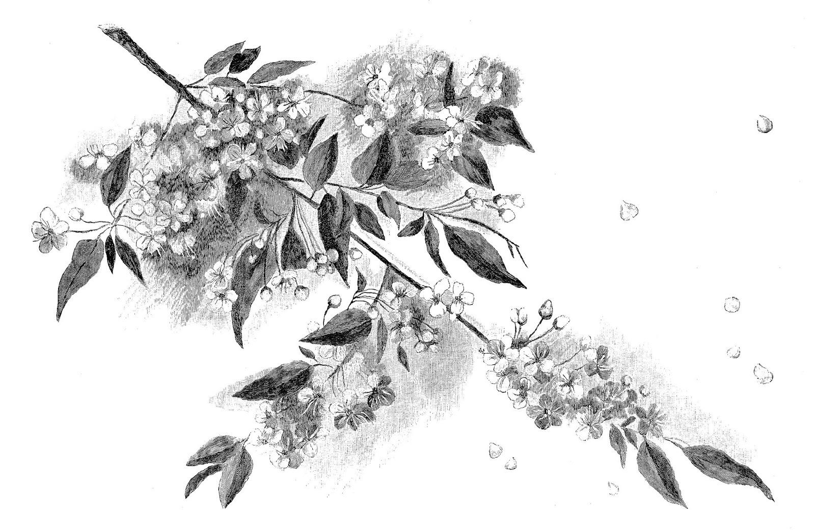 Digital stamp design cherry blossom pencil artwork drawing digital