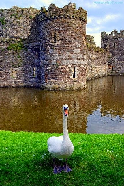 Fotografia ave con fondo de un castillo