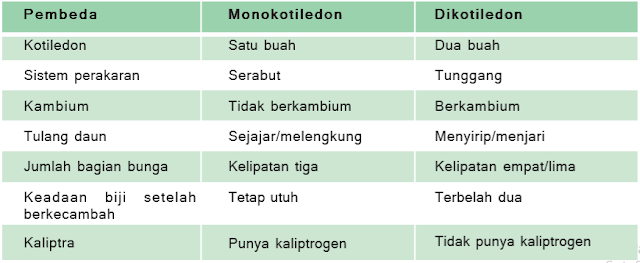 perbedaan dikotil dan monokotil