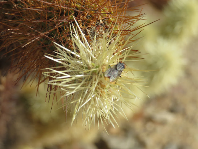 Close Up of Fly on Cactus