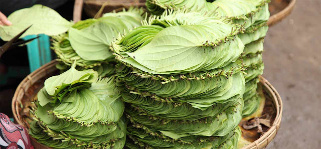 YOU WILL BE SURPRISED WITH THE AMAZING USE OF BETEL LEAF TO YOUR BODY-YOU MUST FIND IT NOW!