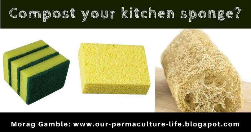 Our permaculture life which kitchen sponges can i compost - Seven different uses of the kitchen sponge ...