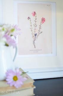 https://3.bp.blogspot.com/-jvRmeTs_19I/V1VNJCwpnvI/AAAAAAAAQik/NU835XNrBKgg-eU1tRb1h5dtVGdILvnPACLcB/s320/Vintage-Wild-Flower-Botanical-Prints-A-Burst-of-Beautiful-16.jpg