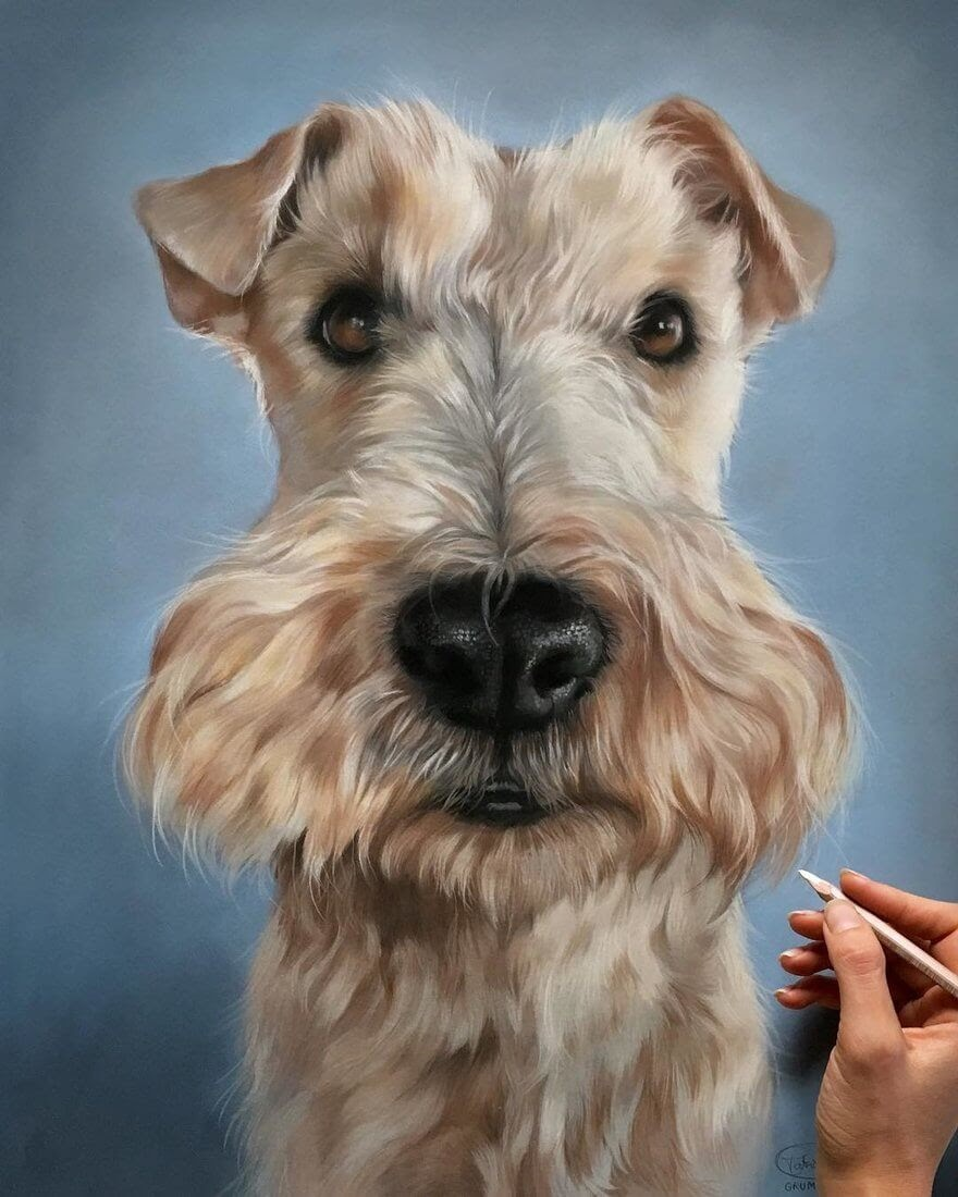 05-Fox-Terrier-Patricia-Otero-Gorgeous-Expressions-in-Dog-Drawings-www-designstack-co