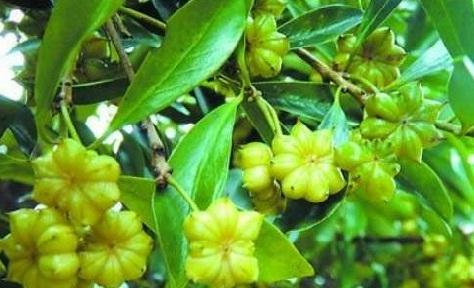Manfaat Bunga Lawang Untuk Kesehatan Doc24food